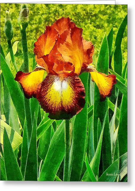 Gardening Greeting Cards - Spreckles Iris Greeting Card by Susan Savad