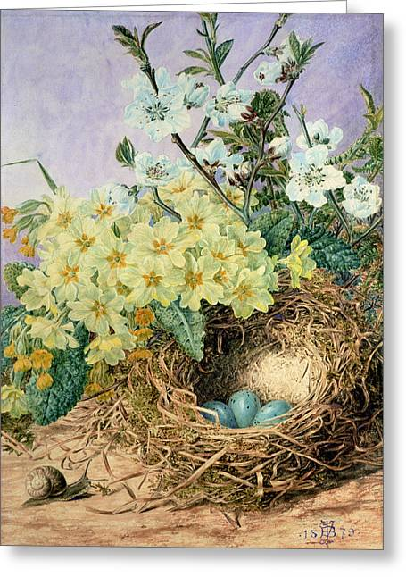Primroses Greeting Cards - Spring, 1879 Greeting Card by Fanny Jane Bayfield