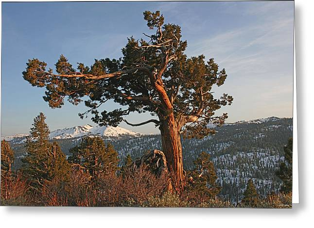 Ebbetts Pass Greeting Cards - Spring Afternoon at Ebbetts Pass Greeting Card by John Gaffney