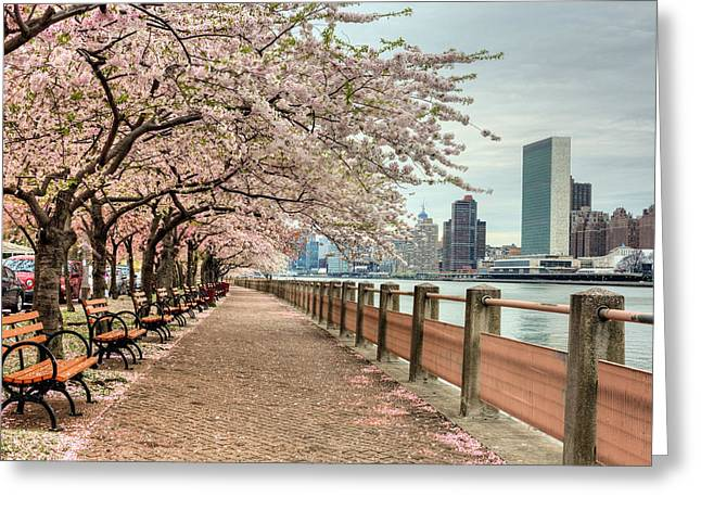 Midtown Greeting Cards - Spring along the East River Greeting Card by JC Findley