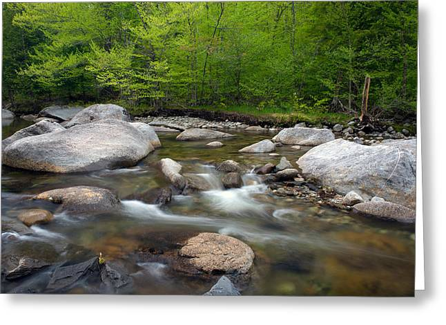 """adirondack Park"" Greeting Cards - Spring Along The North Fork Greeting Card by Panoramic Images"