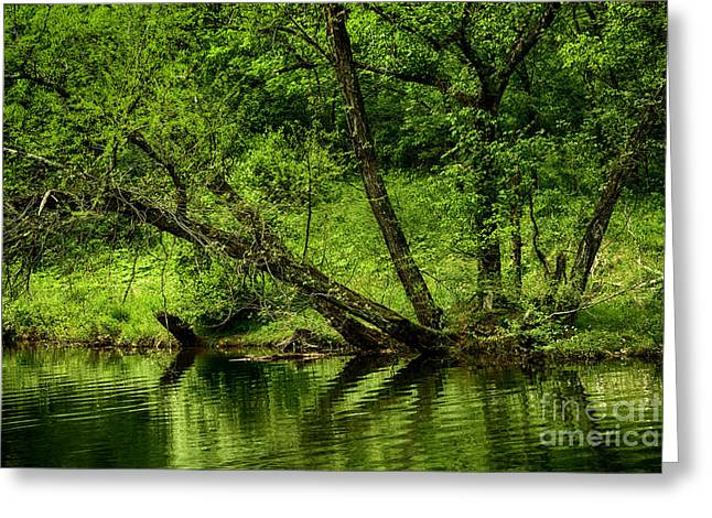 West Fork Greeting Cards - Spring along West Fork River Greeting Card by Thomas R Fletcher