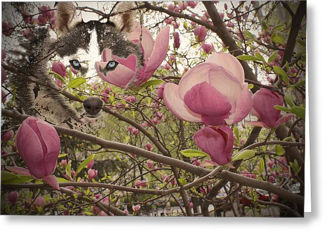 Huskies Photographs Greeting Cards - Spring and Beauty Greeting Card by Georgeta Blanaru