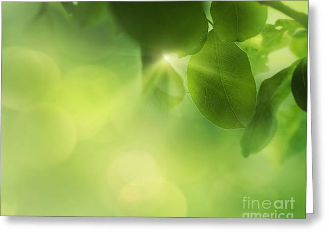 Npetolas Greeting Cards - Spring apple leaf background Greeting Card by Mythja  Photography