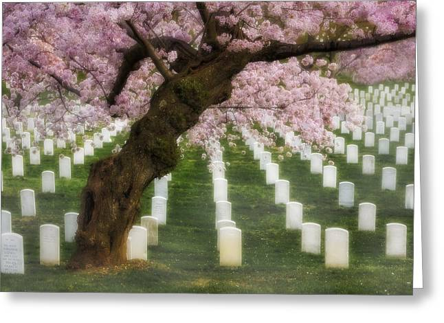 Headstones Greeting Cards - Spring Arives At Arlington National Cemetery Greeting Card by Susan Candelario
