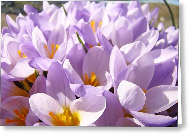 Popular Flower Art Greeting Cards - Spring Art Lavender Crocus Flower Floral Greeting Card by Baslee Troutman