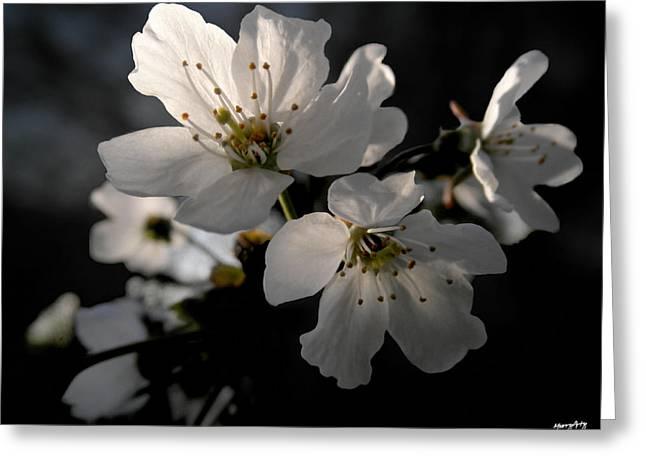 Stamen Digital Art Greeting Cards - Spring Emerging Greeting Card by Russ Murry