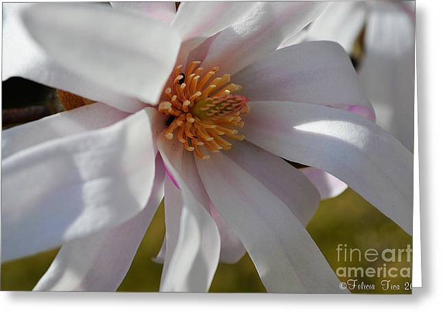 Patriots Framed Prints Greeting Cards - Spring awakening Greeting Card by Felicia Tica
