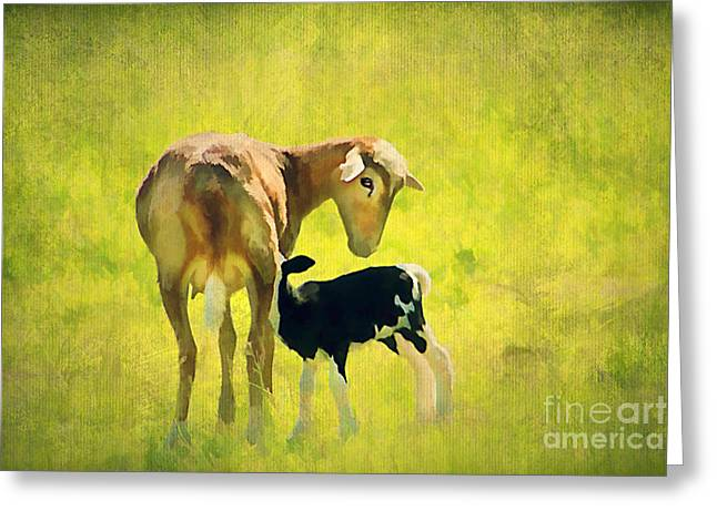 Spring Baby Greeting Card by Darren Fisher