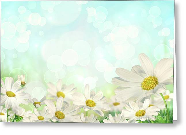 Sun Flower Greeting Cards - Spring Background with daisies Greeting Card by Sandra Cunningham