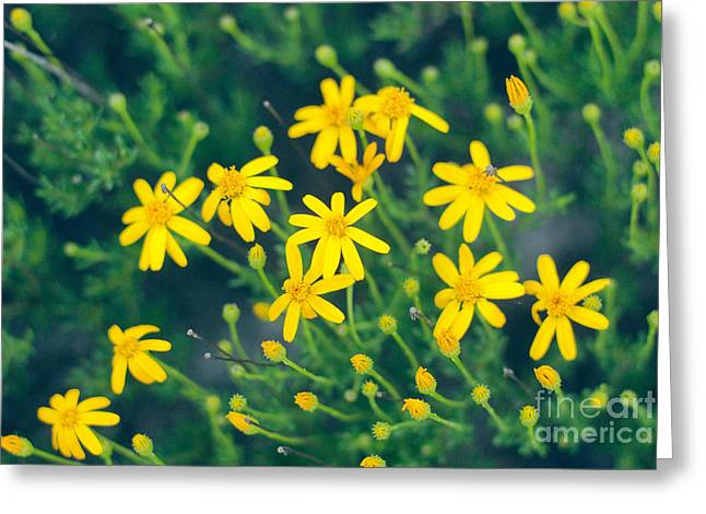 Barbara Shallue Photographs Greeting Cards - Spring Greeting Card by Barbara Shallue