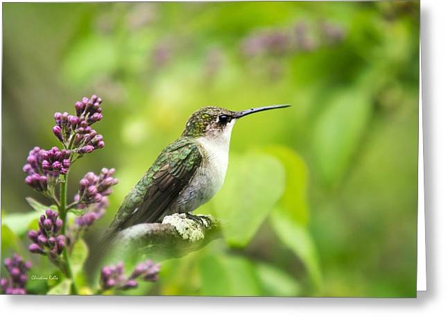 Birds With Flowers Greeting Cards - Spring Beauty Ruby Throat Hummingbird Greeting Card by Christina Rollo