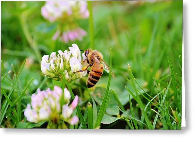 Gold Bug Greeting Cards - Spring Bee Greeting Card by Shelby  Young