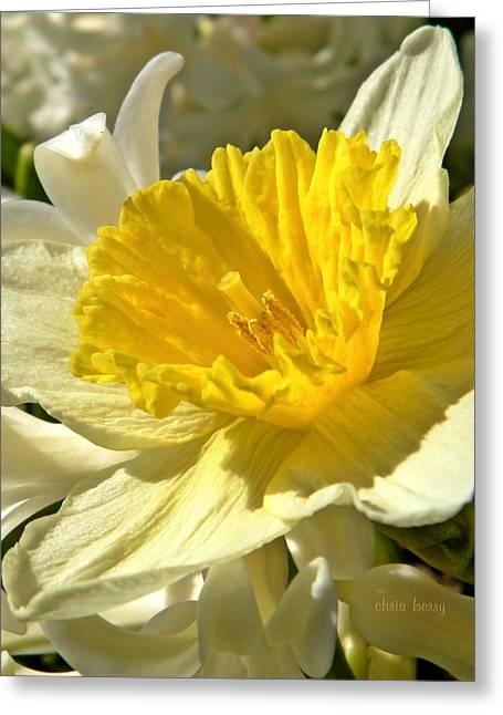 Spring Bloomers Greeting Card by Chris Berry