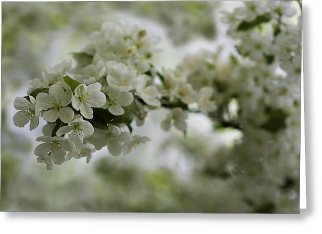 Soft Light Greeting Cards - Spring Bloosom Greeting Card by Sebastian Musial
