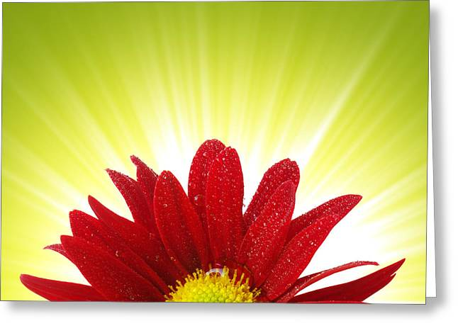 Spring Blossom Greeting Card by Carlos Caetano