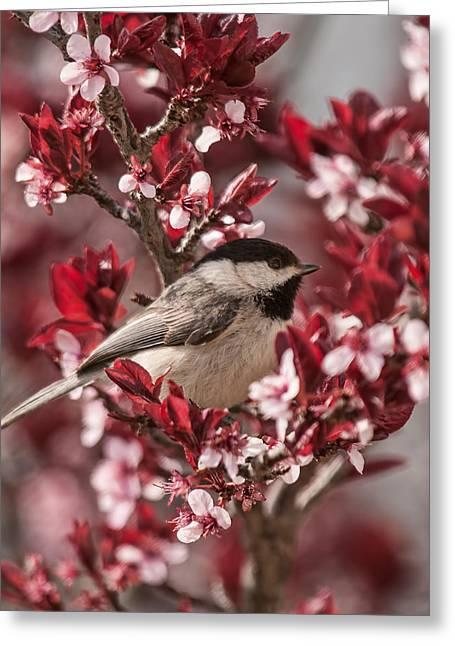 Spring Scenes Photographs Greeting Cards - Spring Blossom Chickadee Greeting Card by Lara Ellis