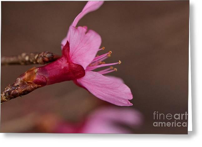Larry Bishop Photography Greeting Cards - Spring Blossom Greeting Card by Larry Bishop