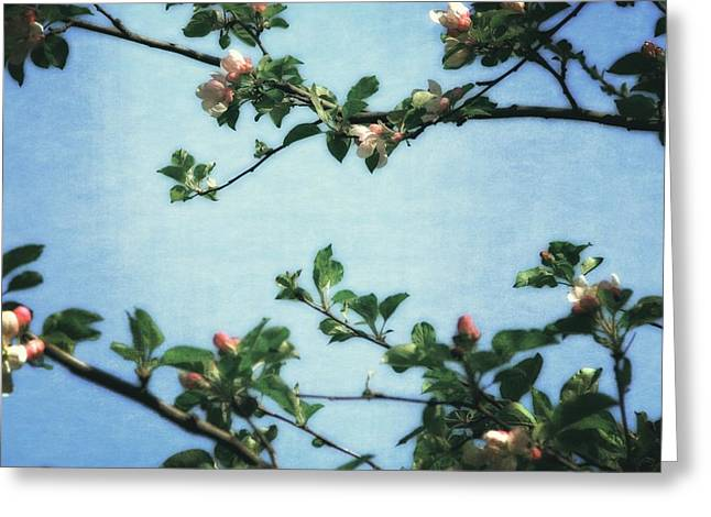 Pink Blossoms Digital Art Greeting Cards - Spring Blossoms 2.0 Greeting Card by Michelle Calkins