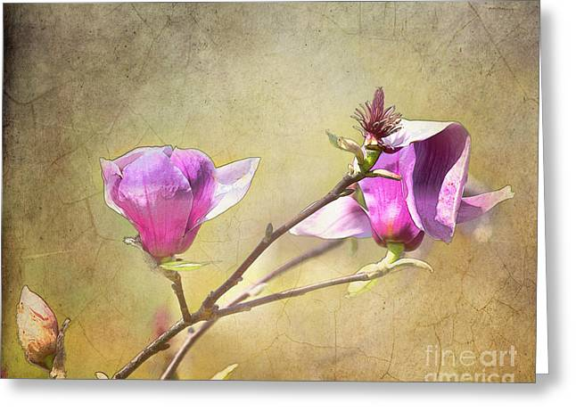 Tn Greeting Cards - Spring blossoms - digital sketch Greeting Card by TN Fairey