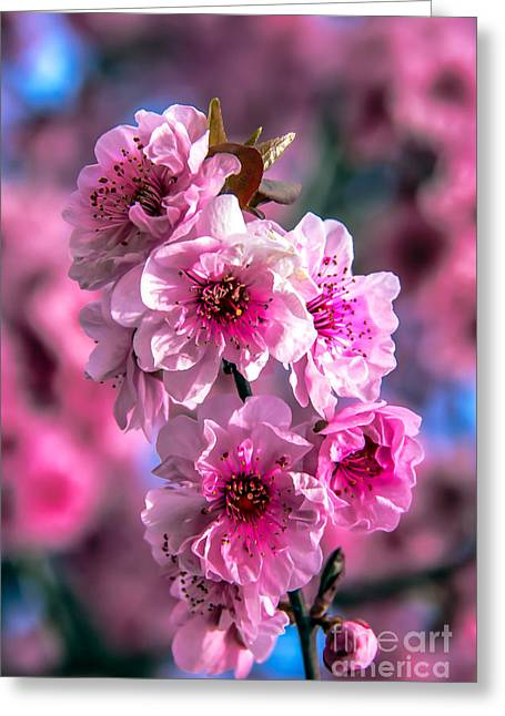 Spring Blossoms Greeting Card by Robert Bales