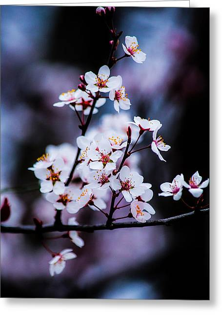 Pink Flower Prints Greeting Cards - Spring Blossoms Greeting Card by Shelby  Young