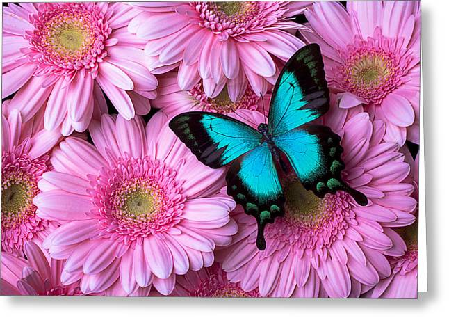 Pink Chrysanthemums Greeting Cards - Spring Blue Butterfly Greeting Card by Garry Gay
