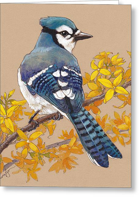 Forsythia Greeting Cards - Spring Blue Jay 3 Greeting Card by Tracie Thompson