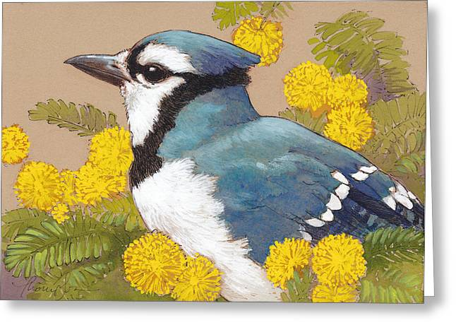 Mimosa Flowers Greeting Cards - Spring Blue Jay 4 Greeting Card by Tracie Thompson