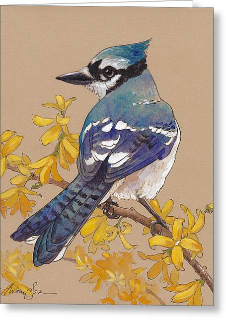 Corvidae Greeting Cards - Spring Blue Jay Greeting Card by Tracie Thompson