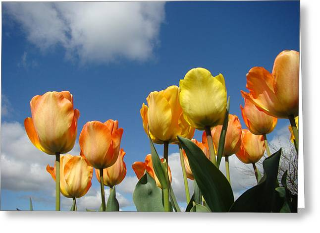 Art Heals Greeting Cards - Spring Blue Sky White Clouds Orange Tulip Flowers Greeting Card by Baslee Troutman