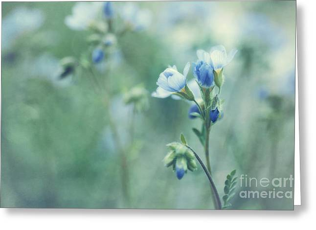 Softness Greeting Cards - Spring Blues Greeting Card by Priska Wettstein