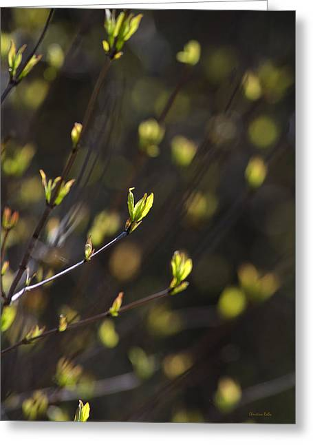 Gold Lime Green Photographs Greeting Cards - Spring Bokeh Greeting Card by Christina Rollo