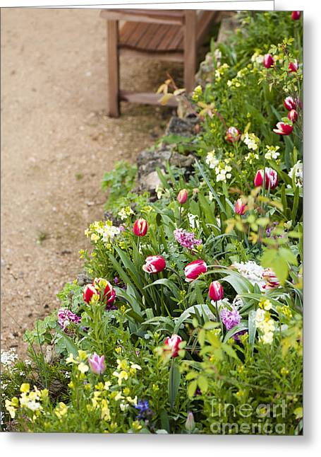 Wallflower Greeting Cards - Spring Border Greeting Card by Anne Gilbert