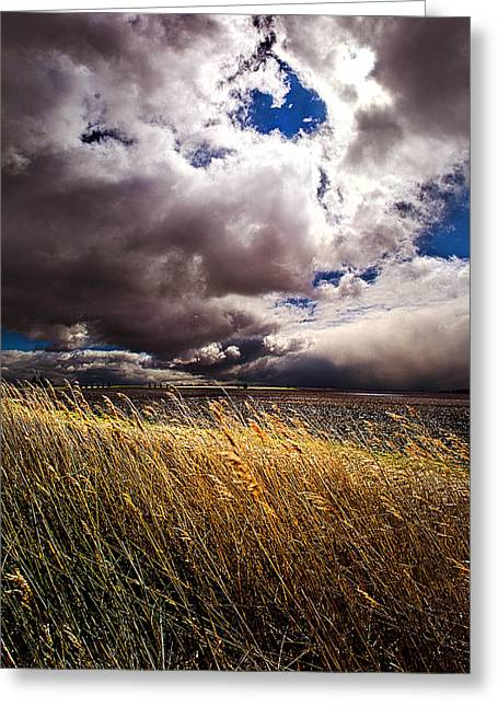 Geographic Greeting Cards - Spring Breezes Greeting Card by Phil Koch