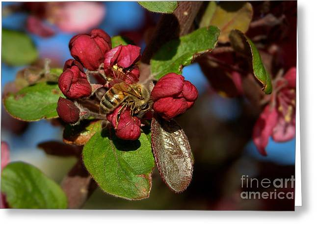 Photos With Red Greeting Cards - Spring Buds With Honey Bee Greeting Card by K D Graves