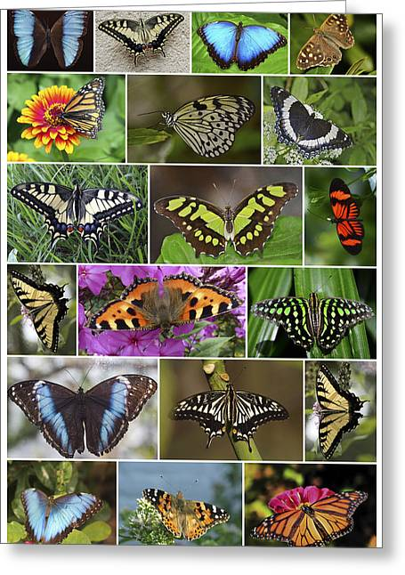 Butterfly In Flight Greeting Cards - Spring Butterfly Panel Greeting Card by Daniel Hagerman