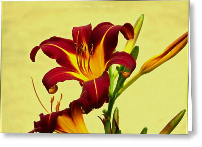 Acrylicprint Greeting Cards - Spring Candor Greeting Card by Sonali Gangane