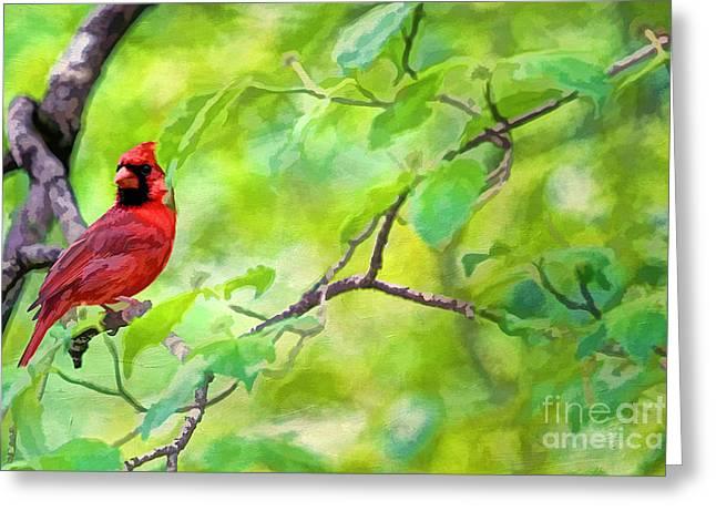 Northern Cardinal Photo Greeting Cards - Spring Cardinal Greeting Card by Darren Fisher
