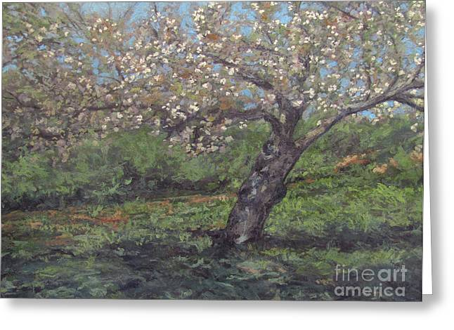 Gregory Arnett Paintings Greeting Cards - Spring Cherry Blossoms Greeting Card by Gregory Arnett
