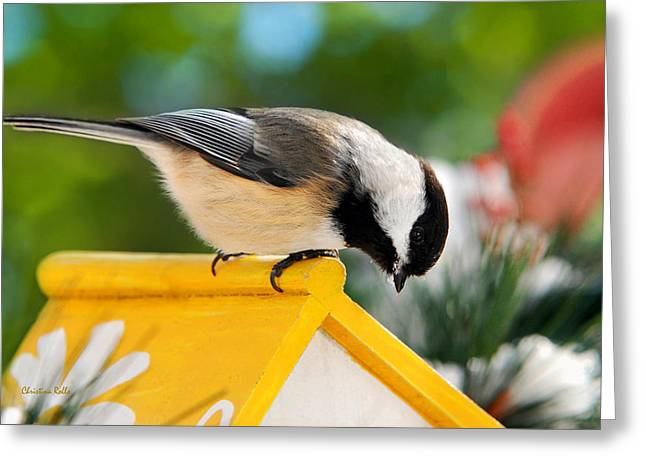 White Frame House Greeting Cards - Spring Chickadee Greeting Card by Christina Rollo