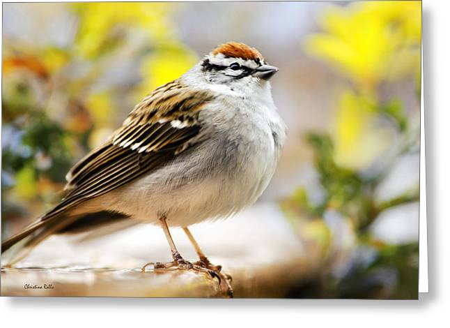 Spring Chipping Sparrow Greeting Card by Christina Rollo