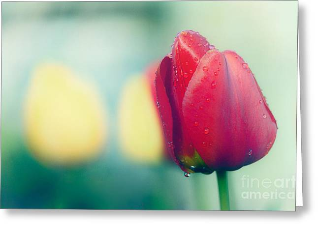 Morning Dew Greeting Cards - Spring Colour Greeting Card by Janet Burdon
