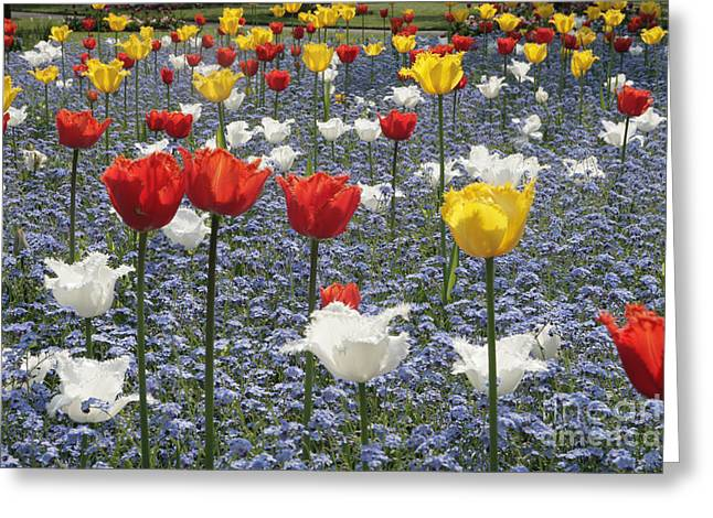 Spring  Colour Greeting Card by Paul Felix