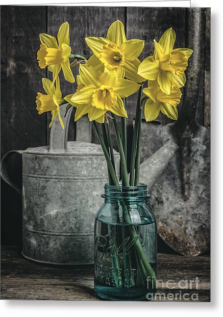 Daffodils Greeting Cards - Spring Daffodil Flowers Greeting Card by Edward Fielding