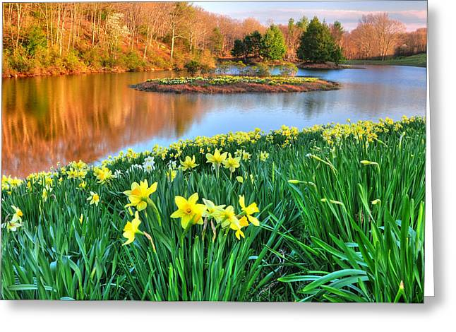 Best Sellers -  - Woodland Scenes Greeting Cards - Spring Daffodils at Laurel Ridge-Connecticut  Greeting Card by Thomas Schoeller