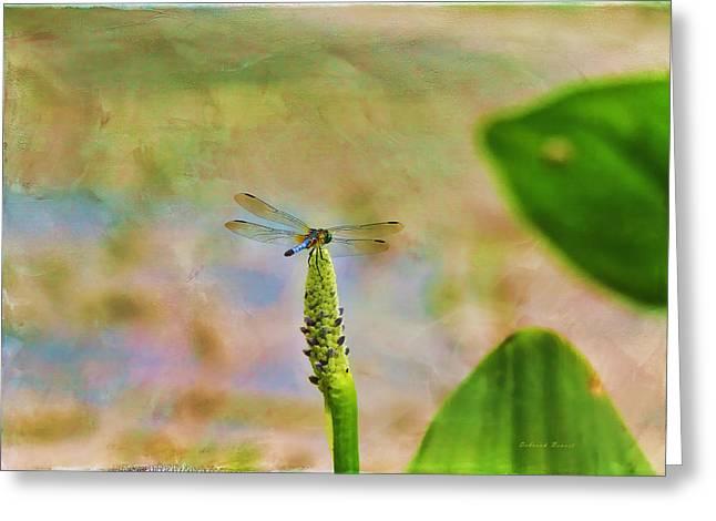 Damsel Fly Greeting Cards - Spring Damsel Greeting Card by Deborah Benoit