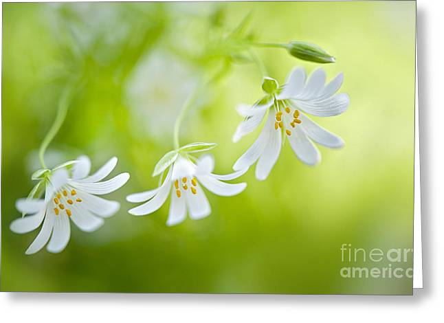 Spring Dancers Greeting Card by Jacky Parker