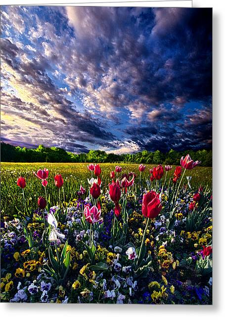Tulip Tree Greeting Cards - Spring Day Greeting Card by Phil Koch
