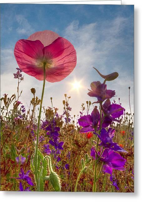 Tn Greeting Cards - Spring   Greeting Card by Debra and Dave Vanderlaan